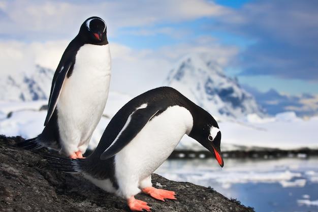 Pinguini in antartide Foto Premium