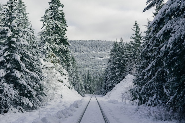 Piste da sci su una ripida collina innevata nella foresta Foto Gratuite
