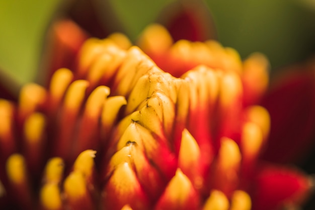 Pistilli di fiori freschi rossi Foto Gratuite