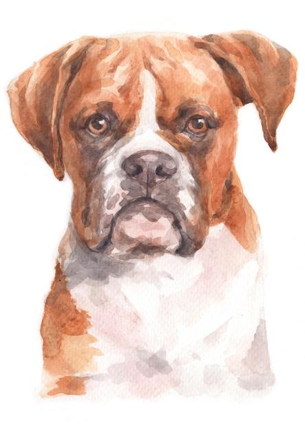 Pittura ad acquerello di boxer Foto Premium