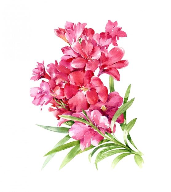 Pittura ad acquerello di foglie e fiori, su sfondo bianco Foto Premium