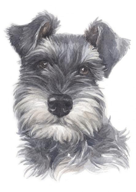 Pittura ad acquerello di schnauzer miniatura Foto Premium