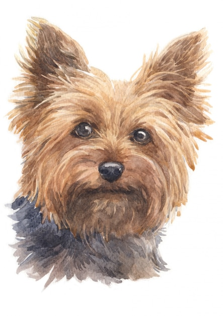 Pittura ad acquerello di yorkshire terrier Foto Premium