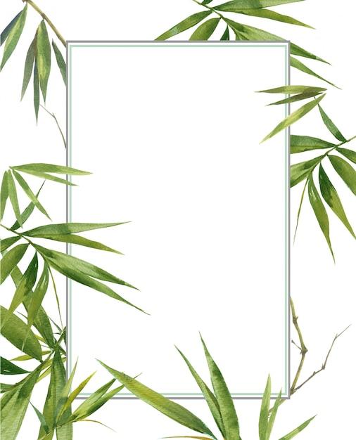 Pittura dell'illustrazione dell'acquerello delle foglie di bambù, su fondo bianco Foto Premium