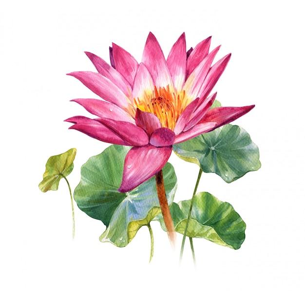 Pittura dell'illustrazione dell'acquerello delle foglie e del loto su bianco Foto Premium