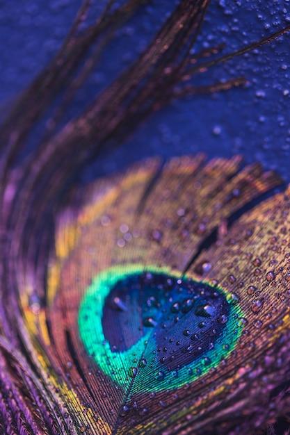 Piuma di pavone con gocce Foto Gratuite