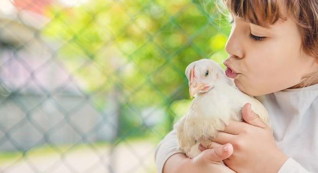 Polli bio in una fattoria di casa per bambini. Foto Premium