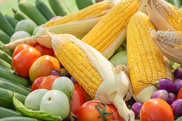 Pomodoro e mais la vegetazione nativa della thailandia Foto Premium