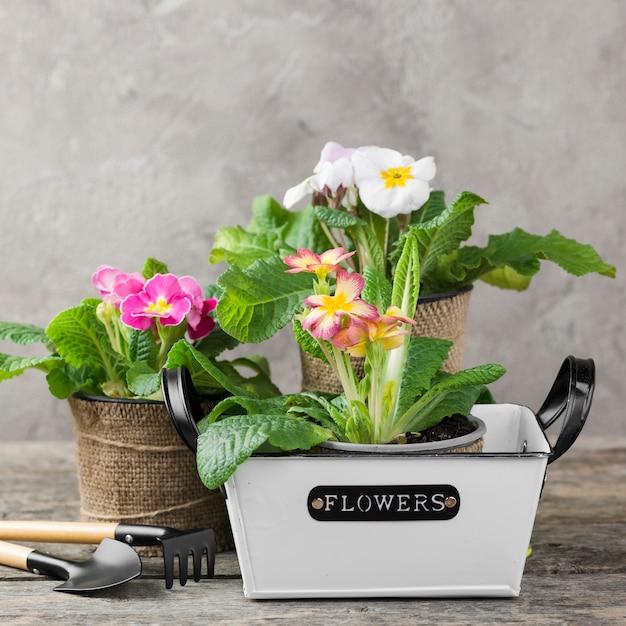 Posta di fiori in fiore con strumenti di cura Foto Gratuite