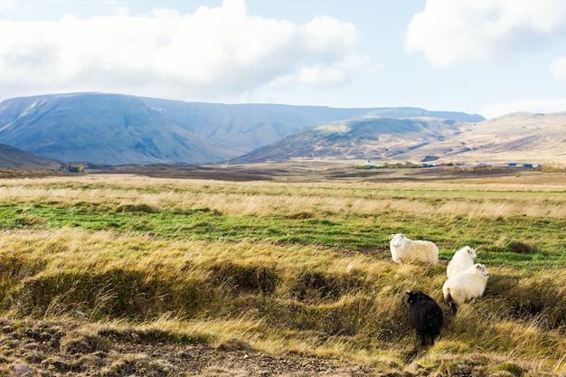 Prateria islandese Foto Gratuite