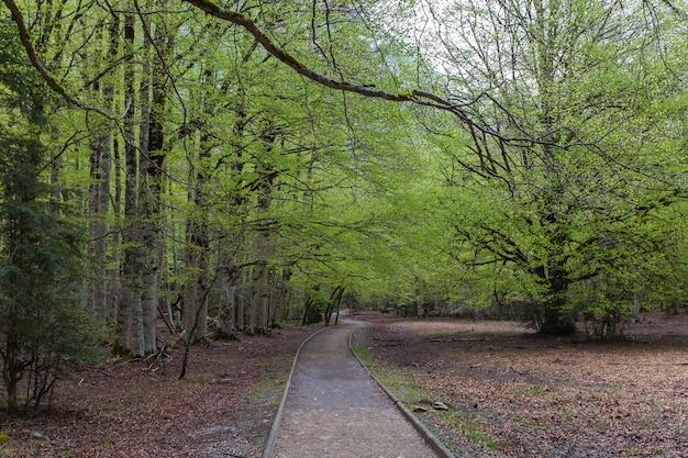 Prato di ordesa in primavera, parco nazionale di ordesa y monte perdido. Foto Premium