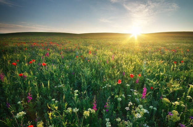 Prato primavera Foto Premium