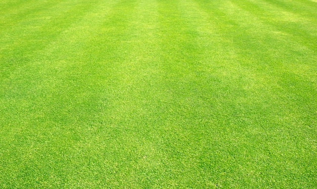Prato verde dei campi da golf del fondo dell'erba Foto Premium