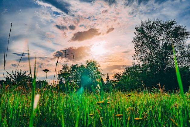 Prato verde sotto cielo blu con il tramonto nel parco verde Foto Premium