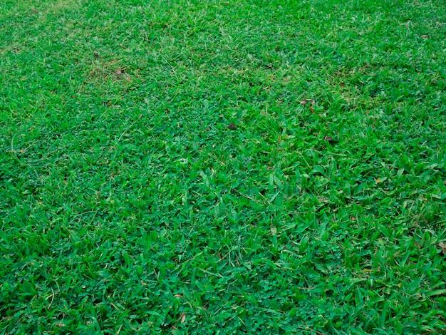 Prato verde Foto Premium
