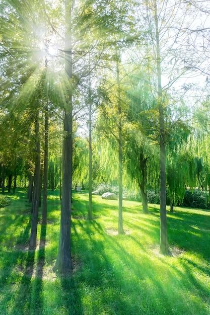 Primavera closeup paesaggio paesaggio tronchi d'estate Foto Gratuite