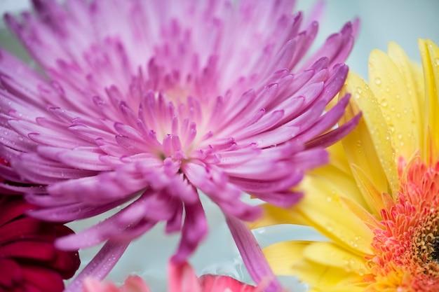 Primo piano dei fiori variopinti che galleggiano sulla priorità bassa dell'acqua Foto Gratuite