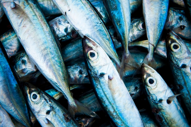Primo piano dei pesci pescati freschi Foto Gratuite