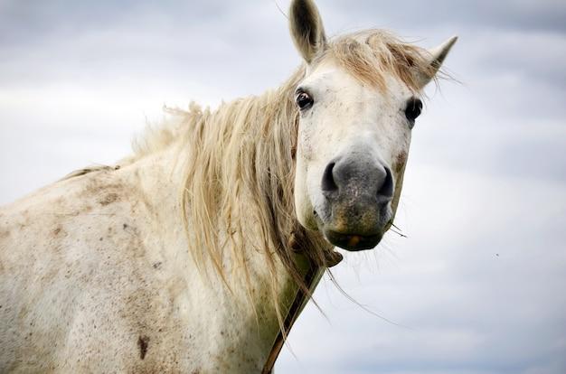 Primo piano del cavallo bianco Foto Gratuite