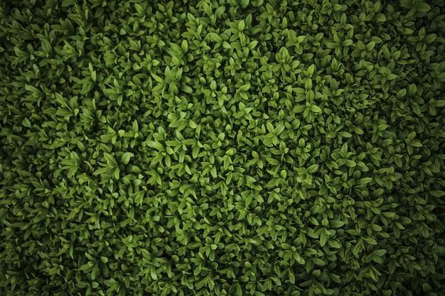 Primo piano del cespuglio verde Foto Gratuite