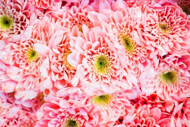 Primo piano del fondo strutturato crisantemo Foto Gratuite