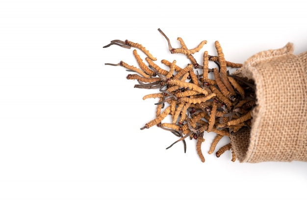Primo piano del sinensis di ophiocordyceps o cordycep del fungo nella borsa del sacco di brown su fondo isolato Foto Premium