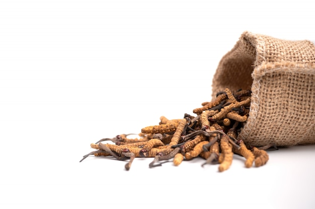 Primo piano del sinensis di ophiocordyceps o cordyceps del fungo nella borsa del sacco di brown sull'isolato su Foto Premium