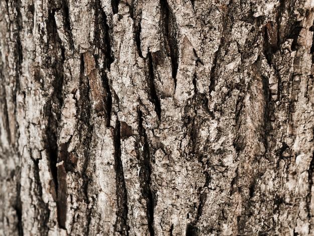 Primo piano del tronco di albero strutturato Foto Gratuite