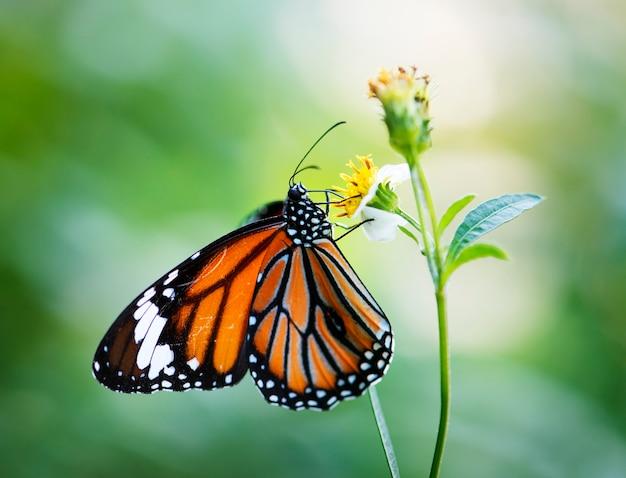 Primo piano della farfalla di monarca Foto Gratuite