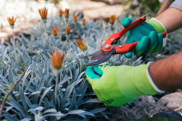 Primo piano della mano di un giardiniere maschio che pota i fiori Foto Gratuite