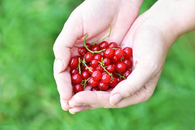 Primo piano della mano di una donna che tiene un ribes maturo a forma di cuore. Foto Premium