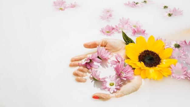 Bagno Lilla E Rosa : Primo piano della mano di una donna con bei fiori gialli e rosa in