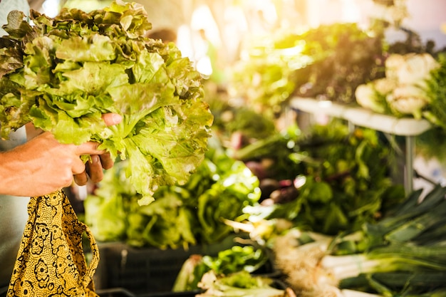 Primo piano della mano umana che tiene lattuga nel mercato ortofrutticolo Foto Gratuite