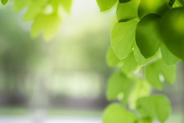 Primo piano della natura foglia verde e luce solare Foto Premium