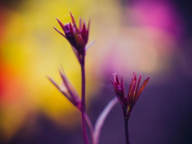 Primo piano di bellissimi fiori. sfondo - sfumature viola. Foto Premium