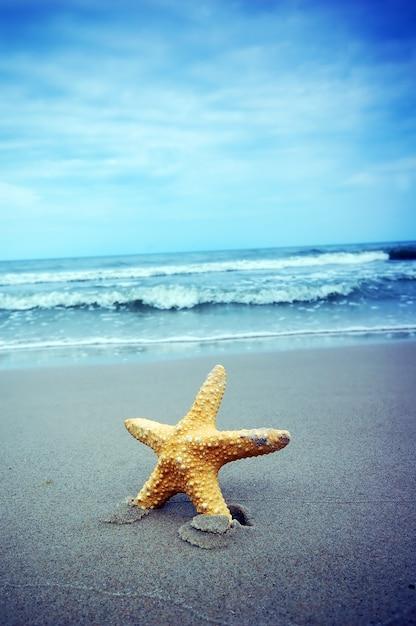 Primo piano di stelle marine con sfondo del mare for Foto per desktop mare