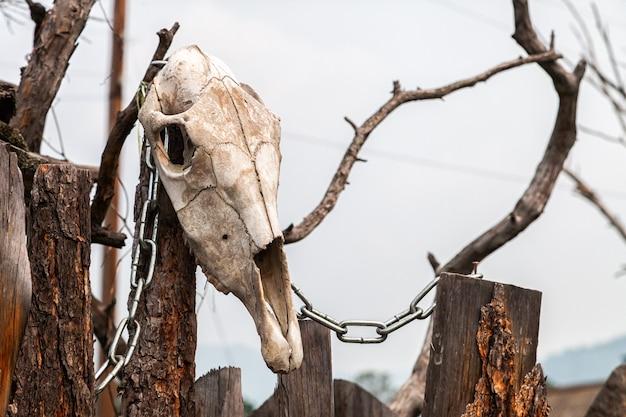 Primo piano di un cranio di mucca bianca con le corna su un ceppo di legno Foto Premium