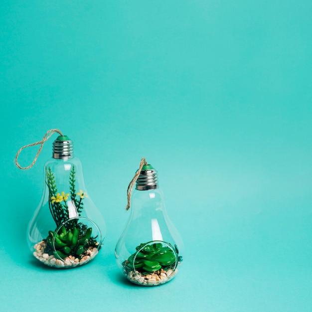 Primo piano di un mini set di arrangiamento di succulente in una lampadina Foto Gratuite