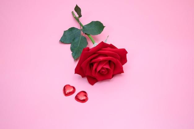 Primo piano di una bella rosa rossa su sfondo rosa con due cuori di caramelle rosse. san valentino, anniversario, concetto di matrimonio. Foto Premium