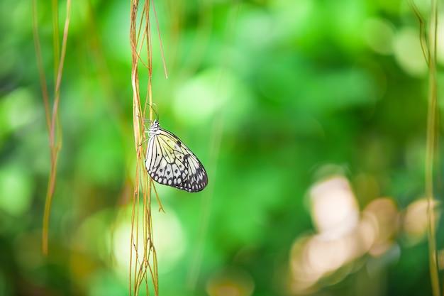 Primo piano di una farfalla sul ramo Foto Premium