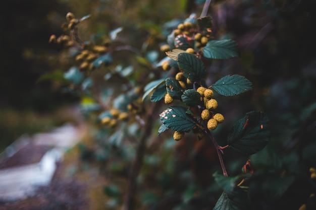 Primo piano di una pianta con i fiori gialli Foto Gratuite