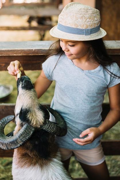 Primo piano di una ragazza che alimenta le pecore nell'azienda agricola Foto Gratuite