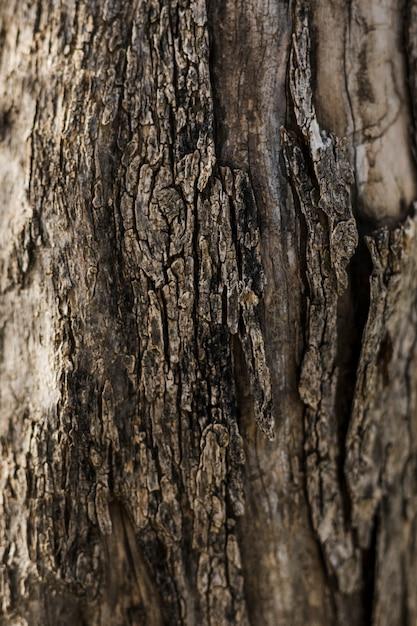 Primo piano di vecchio legno strutturato Foto Gratuite