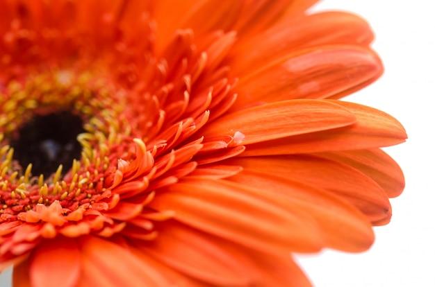 Primo piano, fiore Foto Premium