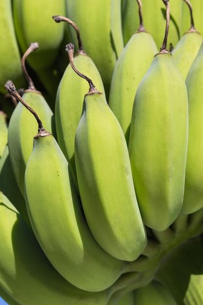 Primo piano giovane mazzo di banane Foto Premium