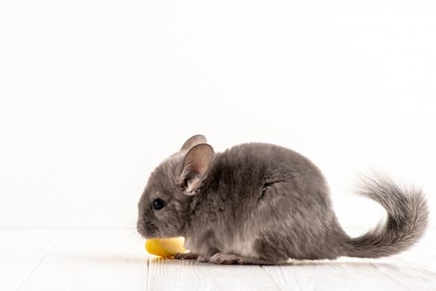 Primo piano un profilo del mouse grigio sullo sfondo bianco accanto un pezzo di mela. Foto Premium