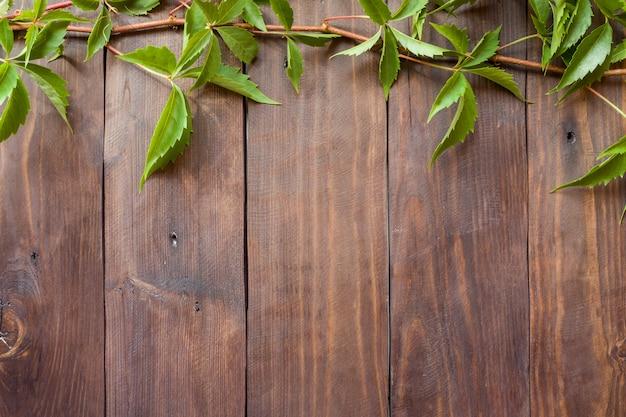 Primo piano verde dell'edera dell'uva nei precedenti di una superficie di legno Foto Premium