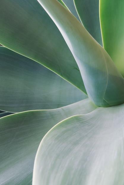 Priorità bassa della foglia di agave Foto Gratuite