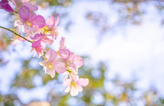 Priorità bassa della natura del fiore, fine in su del fiore delle orchidee. Foto Premium