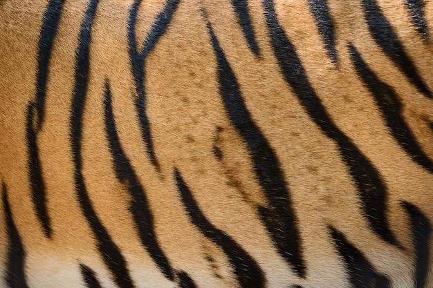Priorità bassa di struttura della pelle di tigre Foto Premium
